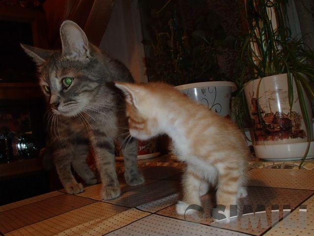 Отдам котят добрые человеческие руки.