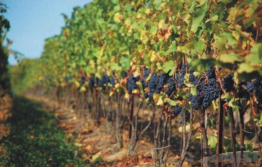 Виноградник по цене квартиры